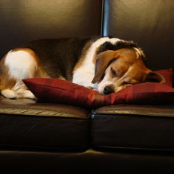 Chavo-sleeping-on-couch