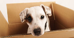 281x144_dog_in_box