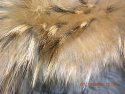 281x210_fur_trim_on_jacket