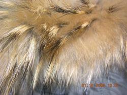 281x210_fur_trim_on_jacket