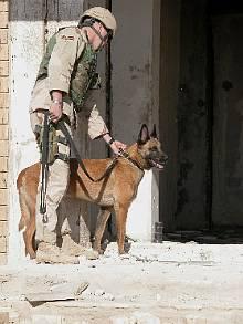 Dog_Iraq