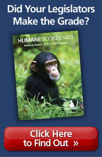 Scorecard_Inset