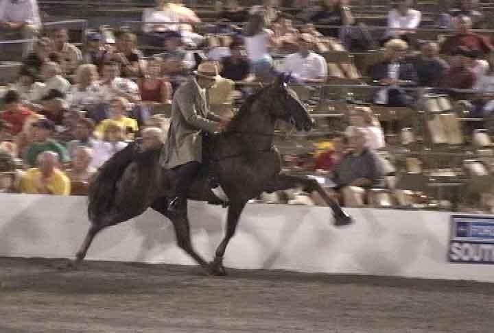 TN_Walking_Horse