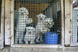 Puppymills