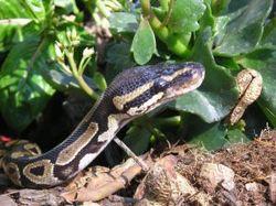 Python_image