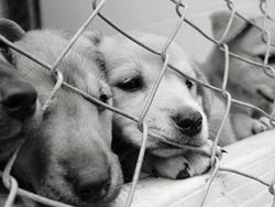 IStock_Puppies_Cages_260x271