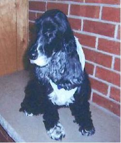 Maggie, dog of U.S. Rep. Phil Hare