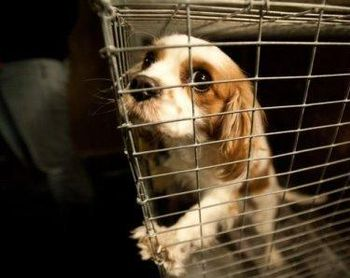 A dog rescued from a puppy mill in Tennessee