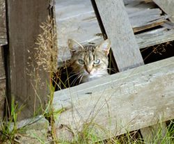 Cat_feral_fence_270x224