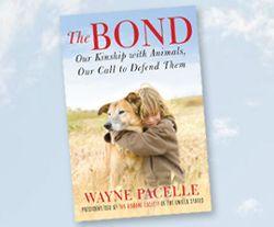 The-bond