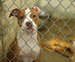 Dog_at_shelter_270x224