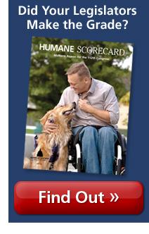 2011 Humane Scorecard