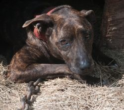 2011 dogfighting rescue kmilani