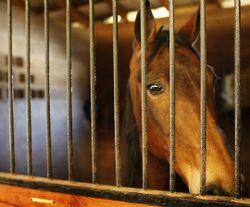Tn-walking-horse-invest