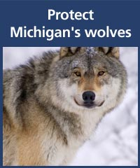 Keep Michigan Wolves Protected
