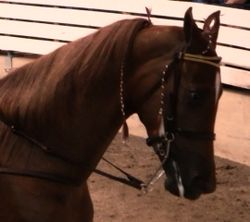 Horsesoring