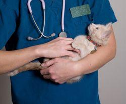 Cat_and_vet_2_270x224