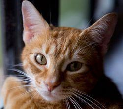 Cat_270x240