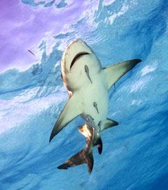 Shark-for-blog