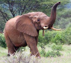 Elephant_istock_270x240