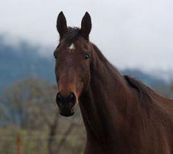 Horse-for-blog