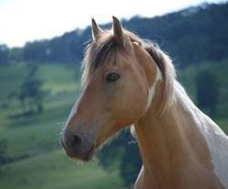 Horse for Scorecard Blog