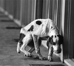 Dog_life_magazine_270x240