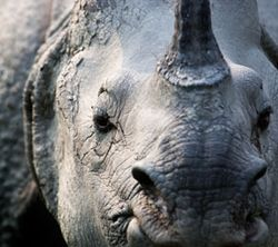 Rhino-for-blog