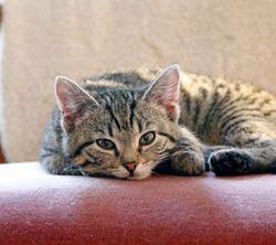 Cat-for-blog