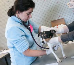 Vet-with-dog_hslf_blog_270x240