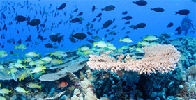 Coral reef and fish, credit James Watt, U.S. Fish and Wildlife Service