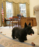 180pxbarney_oval_office