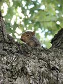 Squirrel1_3