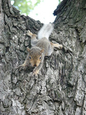 Squirrel2_2