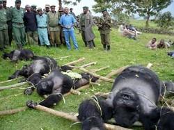Ap_gorillas_080319_ms