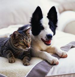 Dog_and_cat2