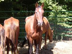 Horses_1_2