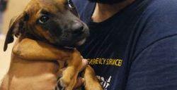 281x144_rescued_dog